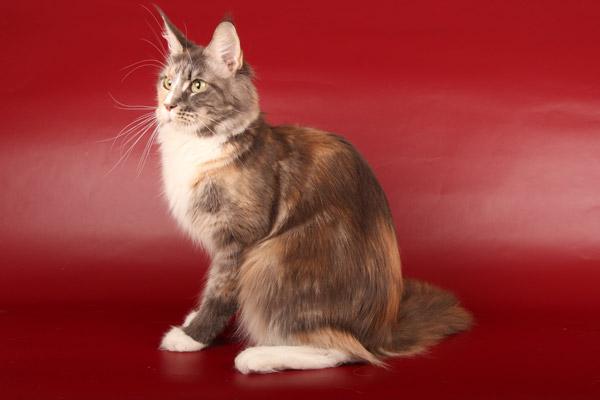 фото куна кошка