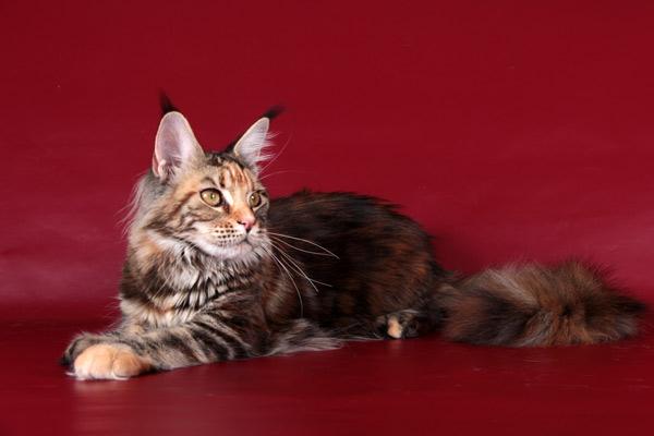 кошки из Германии