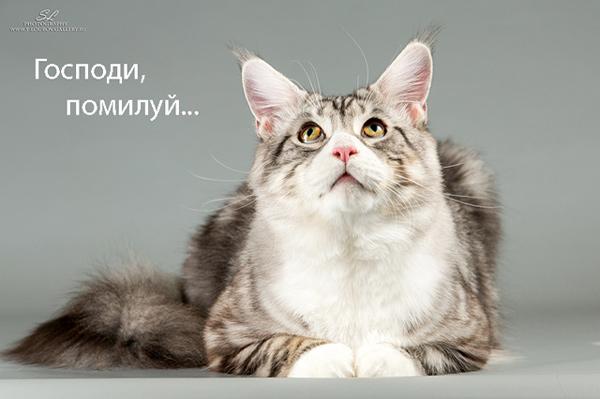 Кот мейн кун Аскабан