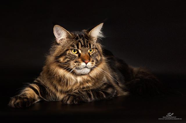 Фотография моего кота Кеши